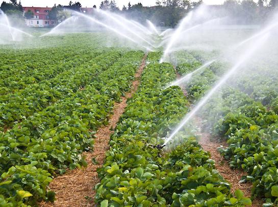 watering-using-farm-generator-ottawa